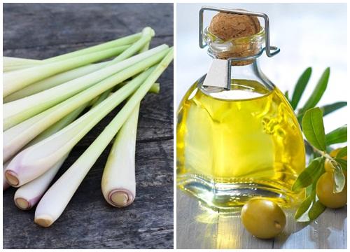 Công dụng của sả và dầu oliu