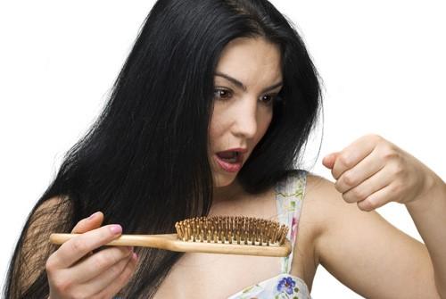 Trị gàu và rụng tóc hiệu quả từ lá thông
