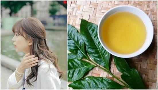 Ngăn rụng tóc từ trà xanh